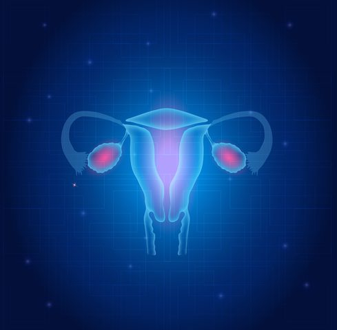 First Successful Ovarian Transplant in Primates Shows Promise for Early Menopausal Women